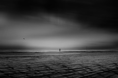 ...earlybird... (*ines_maria) Tags: italy sea seascape seagull bird beach morning blackandwhite monochrome person lonely 535am woman mood dmcgx80 panasonic infinity clouds