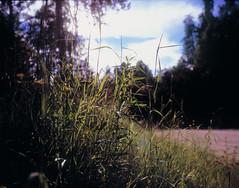Into the sun (suxarik) Tags: mamiya 645 6x45 120 645afd af sekor mamiyasekor mf medium mediumformat film expired e6 color fujifilm fuji velvia fujifilmvelvia100 rvp100 analog slide positive scanned imacon imaconflextightphoto karelia russia sun shining