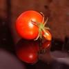 P1014845 (saxonfenken) Tags: 6770misc 6770 one reflection red damaged deformed squareformat tomato pregamewinner gamewsweep