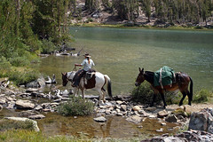 Horse and Pack Mule, Twin Lakes area, California (day_williams) Tags: horse mule pack camp ride rider twinlakes california forest sierras lake rocks