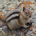 squirrel freeze (go wild - NZ outside) Tags: usa170505