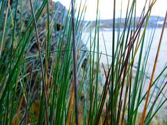 As seen through grass (jo.elphick) Tags: guerillabaynswaustralia beach grass spikey green water
