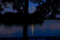 IMG_3196 (DKONOP) Tags: ny newyork stlawrenceriver northcountry alexandriabay jeffersoncounty riverrats summer water