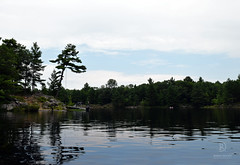A View Of The Calm Water (kaprysnamorela) Tags: calm water tree trees forest woods green blue view landscape reflection nature nikond3300 nikon outdoor lake nine mile nineminelake muskoka ontario canada