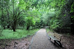 Nature Trail-HBM (VarietyHour) Tags: benchmonday outdoor trail path bench