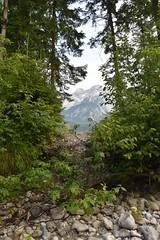 sDSC_3456 (L.Karnas) Tags: slowenien slovenia slovenija sommer summer juli july 2017 gozd martuljek kranjska gora