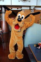 Pluto (sidonald) Tags: tokyo disney tokyodisneysea tds tokyodisneyresort tdr horizonbayrestaurant greeting ディズニーシー ホライズンベイ・レストラン グリーティング pluto プルート