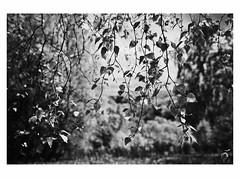 (bruXella & bruXellius) Tags: scotland ecosse schottland inverewegarden uk inverewe gardens