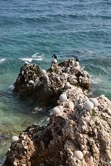 sDSC_5475 (L.Karnas) Tags: summer sommer juli july 2017 croatia hrvatska kroatien istrien istria istra rabac porto albona