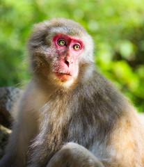 Snow Monkey No.53 (Stuck in Customs) Tags: japan snowmonkeys stuckincustomscom treyratcliff nagano stuckincustoms hdr hdrphotography hdrtutorial portrait x1d hasselblad 90mm