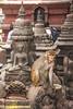 Monkey in the Monkey Temple