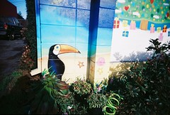 Toucan and Christmas presents (jfpj) Tags: toucan mural mexicanrestaurant restaurant presents christmas redwoodcity california film fuji fuji400film lowresolution 35mm plasticcamera plasticlens plastic toycamera trashcam superheadzultrawidelens vivitar vi