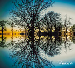 Blue Hour (myoldpostcards) Tags: abstract horizontal symmetry quad alteredreality mirrored reflection trees campbellcemetery road rd sangamon county illinois il myoldpostcards randall randy vonliski season winter atmosphere canon eos 7dmarkii bluehour