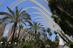 IMG_7381 (AndyMc87) Tags: valencia sky blue palm garden turia stadt der künste colourful travel holiday canon eos 6d 2470 l santiago calatrava