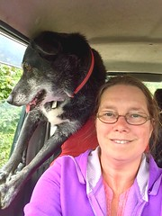 Backseat driver (JulieK (thanks for 8 million views)) Tags: iphonese selfie poppy dog pet car suzukijimny window hww wexford ireland irish