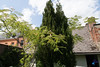 2017 - Albizia (bDom [+ 3.8 Mio views - + 47K images/photos]) Tags: jardin albizia maison bdom famille acacia bruyneeldominique