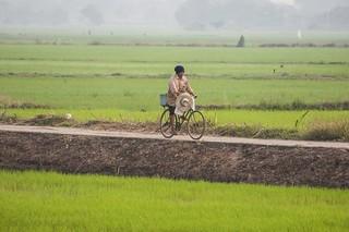 suphan buri - thailande 3