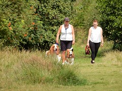 Mossom Bassets (deltrems) Tags: pet dog basset hound mossom lane park field blackpool lancashire fylde coast people women