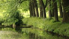 Green Day ... / Grüner Tag ... (buidl-lemmy) Tags: deutschland germany nordhessen northernhesse hessen hesse escheberg park linden allee avenue grün green pond teich spiegelung mirroring