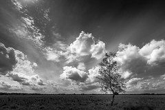 Tree & clouds (RobMenting) Tags: 70d eos landscape noordbrabant nature blackandwhite tree canon europe netherlands canoneos70d boxtel nederland nl