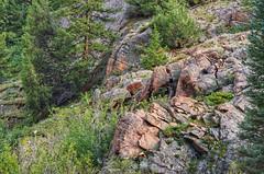 The Rockies (Pejasar) Tags: rockymountainnationalpark colorado rockies woods nationalforrest