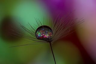 The Big Bang Bubble