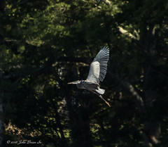 jbreen_04 (annapolisphotographyfieldtrips) Tags: dpca jugbay20162