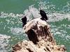 A la costa del Pacífico Perú