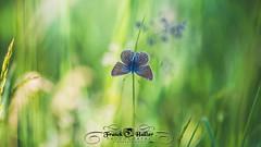 DSC_2887 (Franck.H Photography) Tags: macro insectes araignée coccinelle