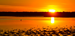 Orange morning (VB31Photo) Tags: vb31photo nature landscape waterscape wild wildlife water paysage mouette contrejour marais salants aigues mortes gard occitanie languedoc france seagull sunrise lever leverdesoleil orange panorama natural zen peaceful