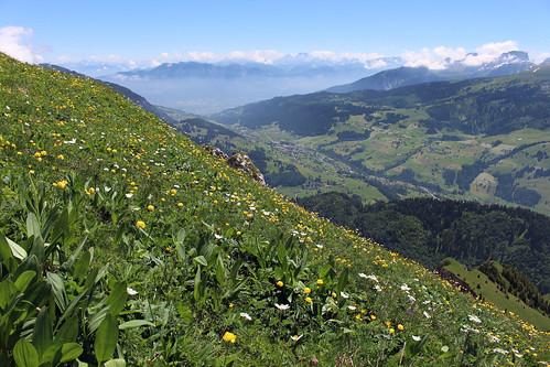 Endlose Blumenwiesen