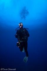 IMG_5991 (davide.clementelli) Tags: scuba underwater underwaterlife diving dive immersione portofino colori colors colore color fishes fish pesci