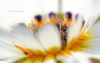 Strahlende Blüte - Beaming blossom