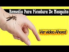 Remedio Para Picadura De Mosquito, Que Es Bueno Para La Picadura De Mosquitos, Picadura De Mosquito (marktinta) Tags: remedio para picadura de mosquito que es bueno la mosquitos