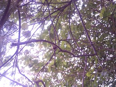 Underneath the tree. (Somersaulting Giraffe) Tags: outdoor tree foliage memories leaves sky underneath branches twigs serene trip ngc nature