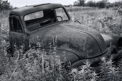 1954 Chevy Flatbed Truck B&W (NormFox) Tags: 1954 bw canada chevy farm field monochrome oil ontario outdoor rural rust truck abandoned