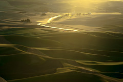 "Palouse hills of wheat land at Steptoe Butte, Colfax, Washington (Dixin Yan, Microsoft Most Valuable Professional) Tags: agriculture wa washington pacificnorthwest field farm wheat wheatland green yellowpalouse steptoe colfax sunset stateofwashington ""pacific northwest"" evening"