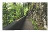 FOTOSERIE RAPPENLOCHSCHLUCHT #5 (PADDYSCHMITT.DE) Tags: rappenloch rappenlochschlucht klamm bergbach dornbirn voralberg gäntle wasser tobel wasserfälle wald natur outdoor waterfall river