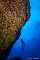 IMG_6001 (davide.clementelli) Tags: scuba underwater underwaterlife diving dive immersione portofino colori colors colore color fishes fish pesci