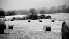 La gelée blanche. (Un jour en France) Tags: monochrome nature campagne bocage foin paturage champ paysage