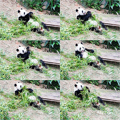 15 (樂活的大方) Tags: 20170724sb 新加坡動物園 river safari