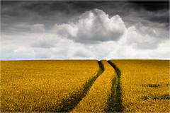 Allrad (Beppe Rijs) Tags: deutschland fjord germany landschaft natur schlei schleswigholstein landscape nature wolken wolkendecke field feld gras horizont horizon clouds farbig colored line linie rural ländlich pastell fertile fruchtbar freshly frisch color farbe acker blue blau yellow gelb vivid lebhaft roggen rye track spur
