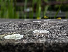Macro Mondays (nheyermeyer) Tags: texture landschaftsparknord memberschoicetexture focusbracketing macromondays lapadu stacked omdem5ii olympus mzuiko1240pro makro macro beton concrete