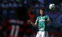 Palmeiras x Vitória (16/07/2017) (sepalmeiras) Tags: allianzparque campeonatobrasileiro palmeiras sep sériea vitória palmeirasxvitoria16072017 edudracena