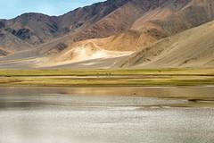 Home of the Kiang (ZeePack) Tags: noperson landscape travel nature water outdoors sky road mountain snow scenic kiang tibetanwildass habitat hanle ladakh jammuandkashmir india equuskiang grassland tibetanplateau canon 5dmarkiii
