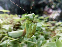 #Grasshopper (binethshalika) Tags: grasshopper