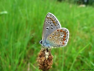 Butterfly 1375