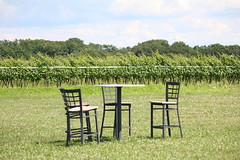 A Table in the Sun (eyriel) Tags: field nature vines grapes vineyard winery table chair chairs landscape
