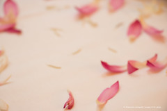 _MG_9483.jpg (Dhammika Heenpella / Images of Sri Lanka) Tags: dhammikaheenpella srilanka imagesofsrilanka lotuspetals ධම්මිකහීන්පැල්ල ශ්රීලංකාව ඉමේජස්ඔෆ්ශ්රීලංකා