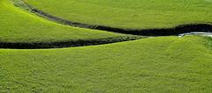 Green (gianclaudio.curia) Tags: verde campagna prato natura digitale nikond601 d610 sigma sigma24105 calabria tarsia